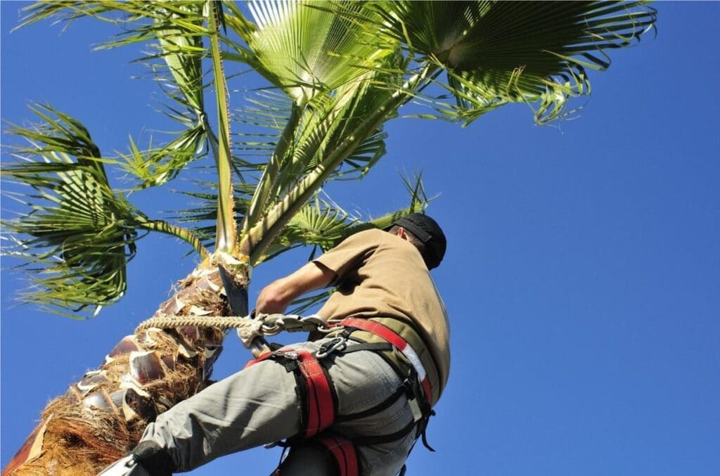 Palm Tree Maintenance