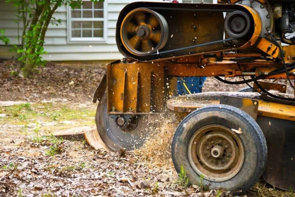 Stump removal and stump grinding | Ipswich