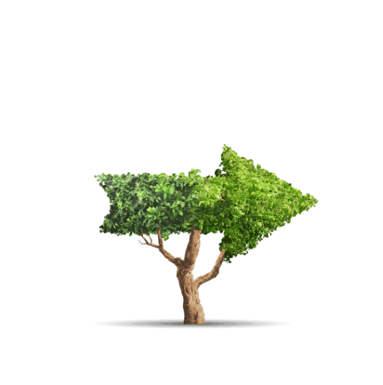 Ipswich Tree Services | Tree disputes